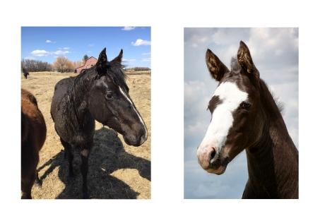 foals heads